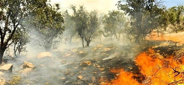 دهلران/ مراتع و جنگل های قلعه انجیران و نواحی اطراف زرین آباد طعمه حریق شد