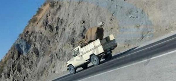 ارسال و انتقال تسلیحات نظامی به کامیاران