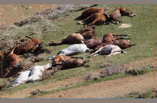 کشتن اسب کولبران توسط نیروهای مسلح ایران
